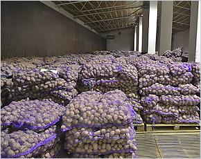 Брянская область признана крупнейшим в ЦФО картофельным донором