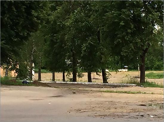 Брянское облспортуправление пообещало построить стадион «Десна» на месте пастбища для коз до декабря 2018 года (ФОТО)