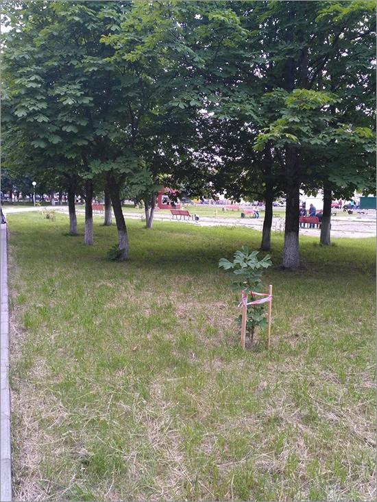 В Брянске случилось очередное обострение вокруг Пролетарского сквера