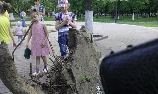 Под напором ветра в Брянске дерево рухнуло на детскую площадку