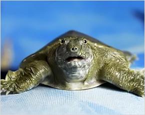 Брянская прокуратура всеми силами встала на защиту черепахи