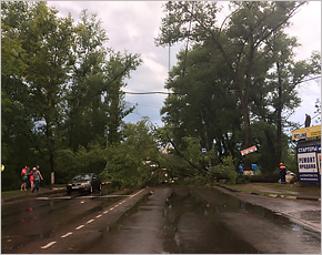 Дождевой шквал повалил в Брянске на дорогу очередной тополь