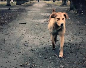 ОНФ намерен потребовать у Брянской горадминистрацию приют для бездомных животных