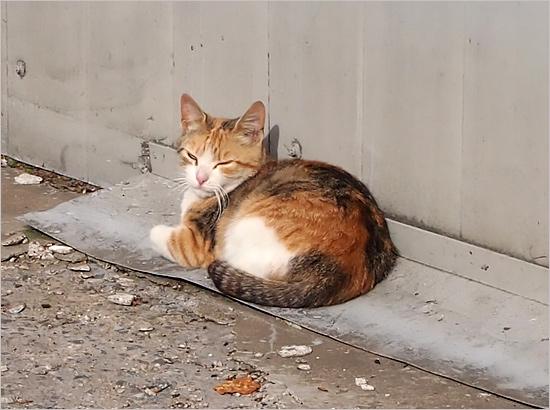 Не забудьте поздравить: 8 августа — Всемирный день кошек