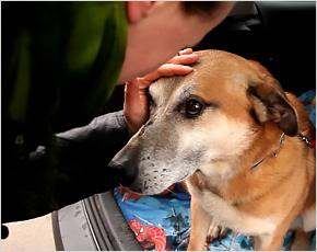 Брянский киноклуб «Цифра & Плёнка» открывается «Каждой собакой»