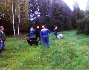 Заблудившегося в лесу 80-летнего дятьковца ищет сотня человек и собаки — МЧС