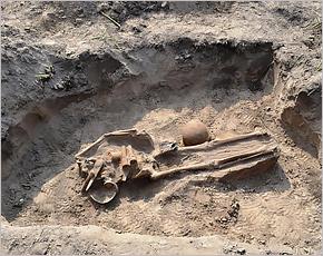 На поле в Навлинском районе брянские поисковики обнаружили тридцать погибших красноармейцев
