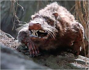 Житель Новозыбкова лечится после укуса бешеной крысы