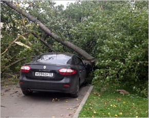 Сильный ветер повалил в Брянске деревья на автомобили