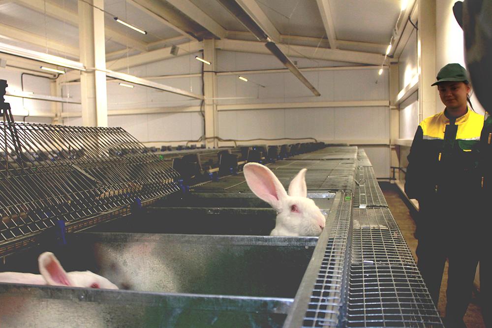 «Диетическое легкоусвояемое мясо», разговор на бойне и «Корпус для самцов» — пресс-тур на будущий крупнейший кролиководческий комбинат в России