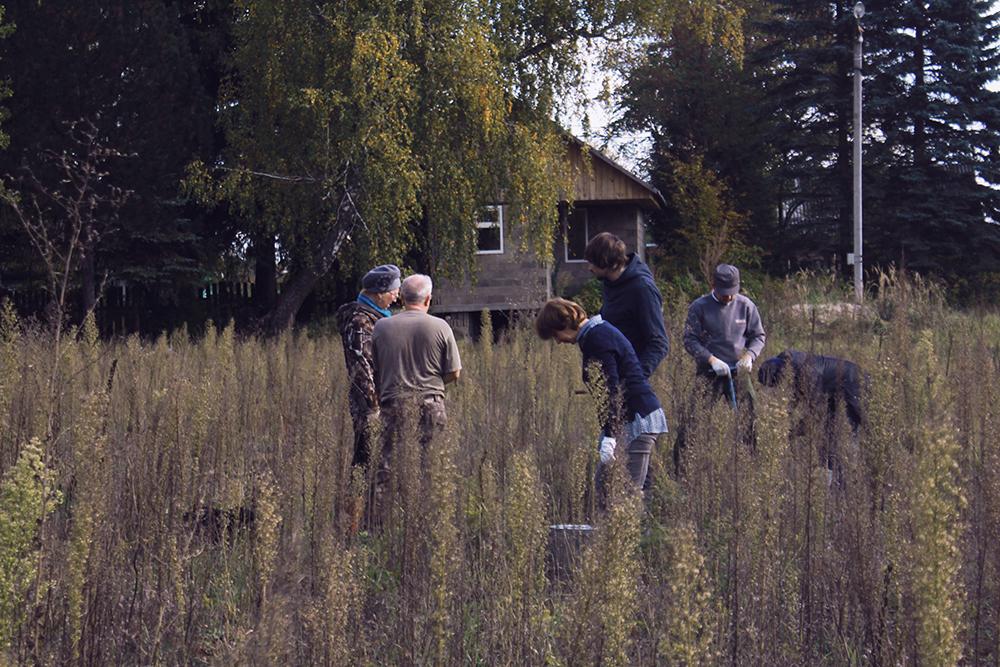 Брянские волонтёры посадили 70 000 деревьев из общероссийского миллиона
