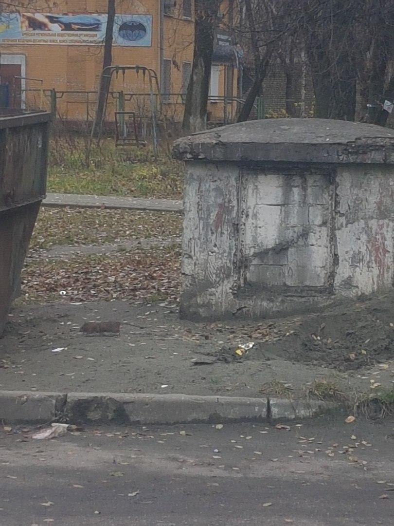 В Брянске у мусорных баков возле детского сада расплодились крысы