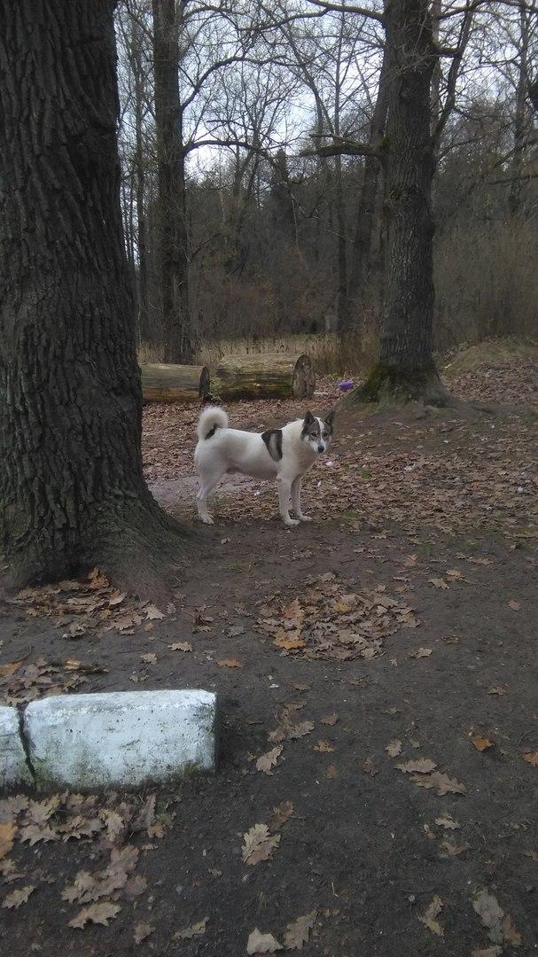 В Белых Берегах третье поколение собак нападает на людей