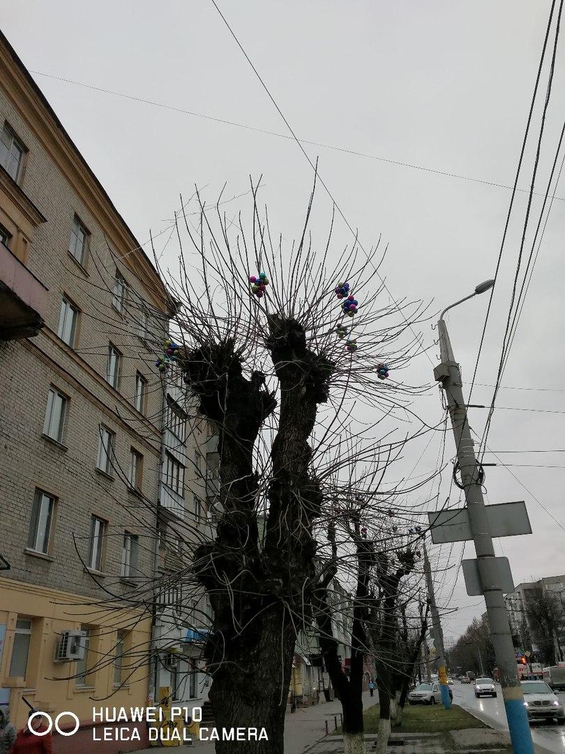 Чёрт-те что и сбоку бантик: власти Брянска вбили осиновые колья в сердце Нового года