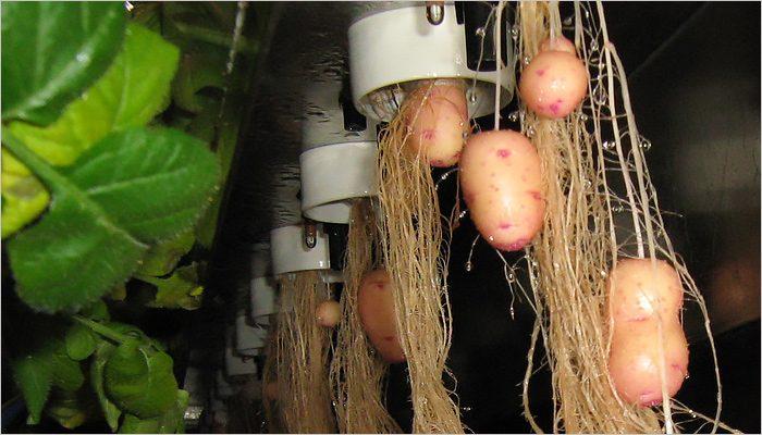 Вьетнамские спецы по аквакультуре поинтересовались выращиванием беспочвенного картофеля в БГАУ