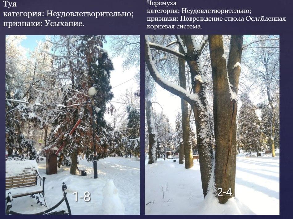 Глава Брянска опубликовал планы вырубки в Круглом сквере двенадцати деревьев