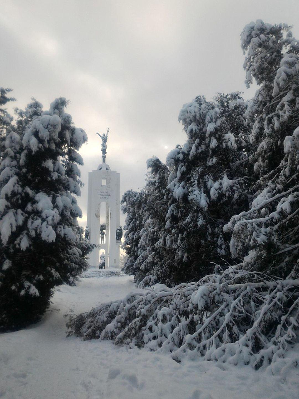 В Брянске после снегопада стало на 30 деревьев меньше