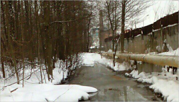 Запах канализации из брянского леса «Заставище» чувствуется на Камвольном повороте