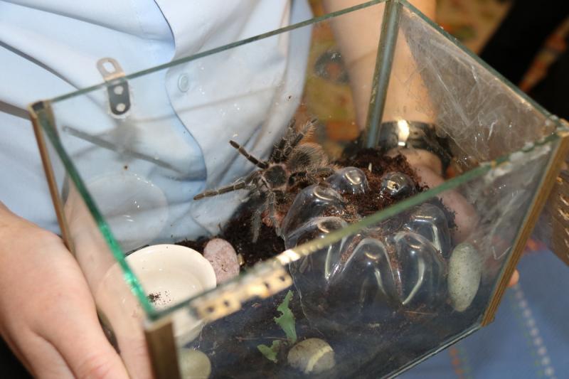 Брянский полицейский приютил у себя потерянное семейство пауков-птицеедов