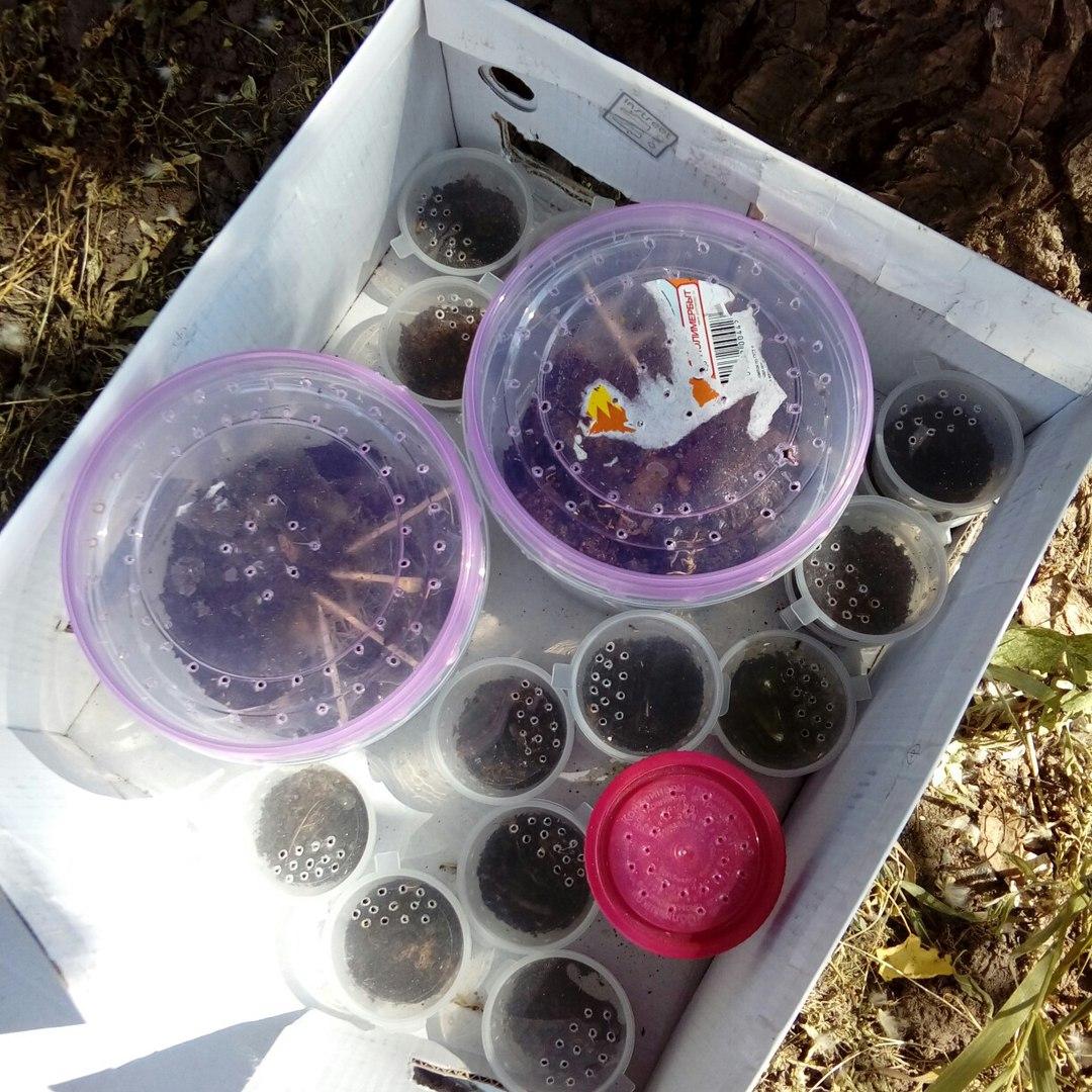 Неизвестные подкинули на детскую площадку в Брянске паука-птицееда с выводком
