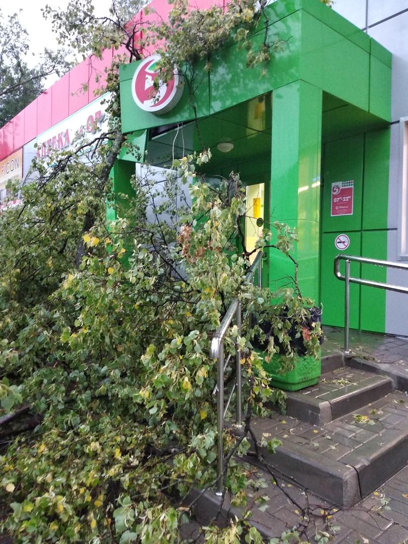 В Дятьково поваленное ураганом дерево перегородило вход в супермаркет