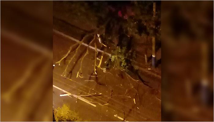 Брянские коммунальщики оперативно убрали упавшее в центре города дерево