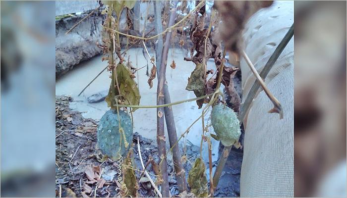 По брянскому лесу «Заставище» вновь потекли фекальные ручьи