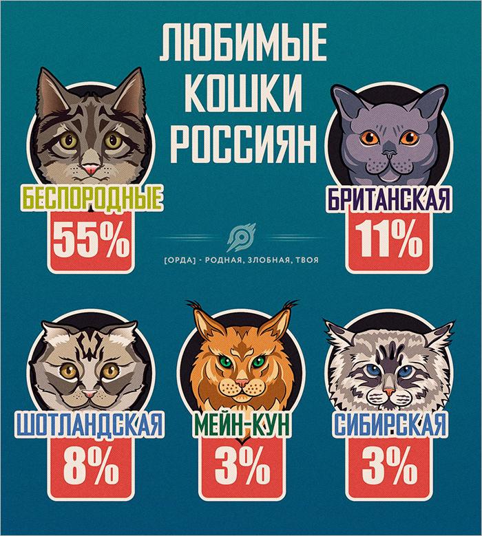 Самая популярная порода кошек у россиян — беспородная кошка