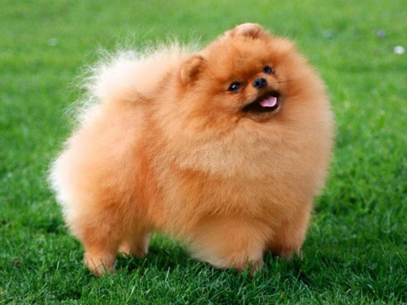 Список собак, которые идеально подойдут для аллергиков и детей