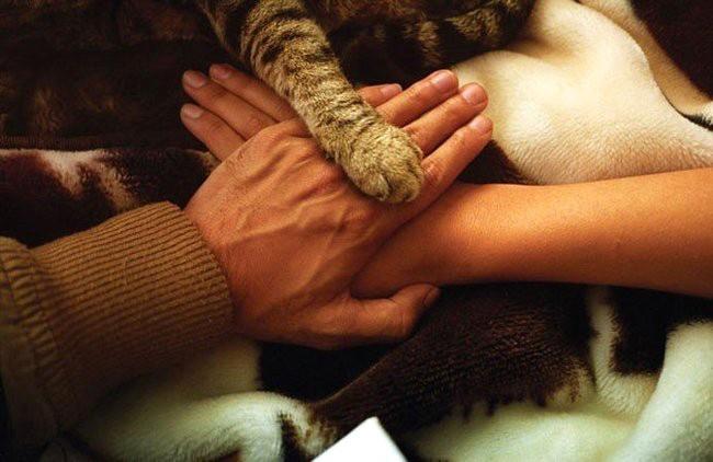 Котенок – лекарство против скуки в отношениях