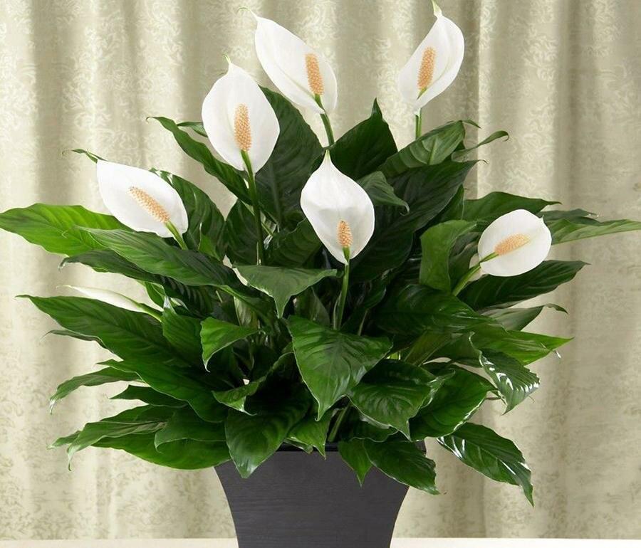Цветы, которые приносят в дом гармонию и взаимопонимание