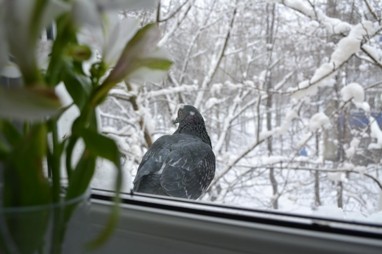 О чем говорит примета, когда птица стучится в окно?